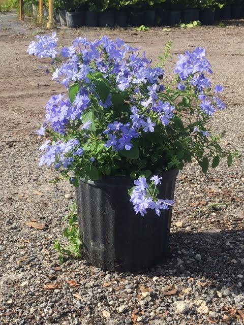 1/2/3/5 Gallon Black Plants Growing Bag Vegetable Flower